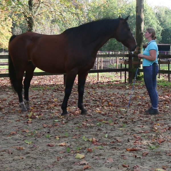 paardentraining cursus begeleiding