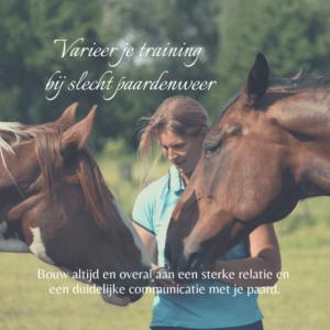 dorien lambrechts cursus paardentraining