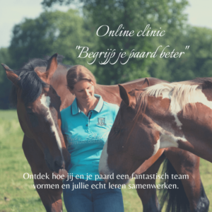 dorien lambrechts online clinic paardentraining